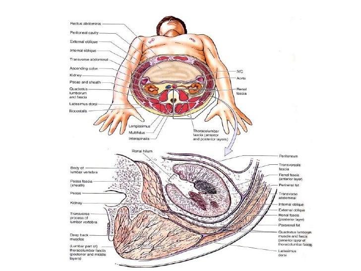 Reproteritoneum Anatomy and Pathology