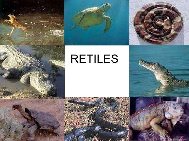 RETILES
