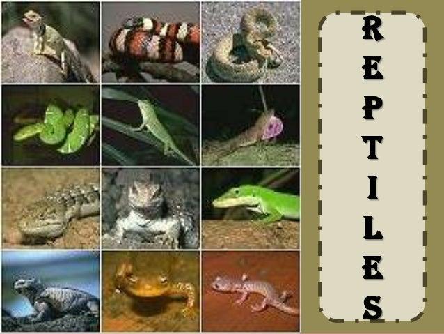 A 2 Z Reptiles Reptiles