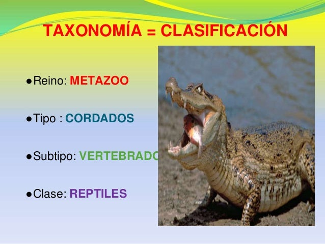 Taxonomia de 5 animales yahoo dating. Dating for one night.