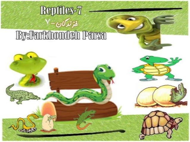 Reptiles 7-8