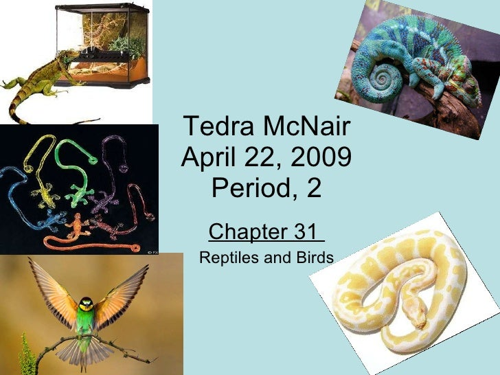 Tedra McNair April 22, 2009 Period, 2 Chapter 31  Reptiles and Birds
