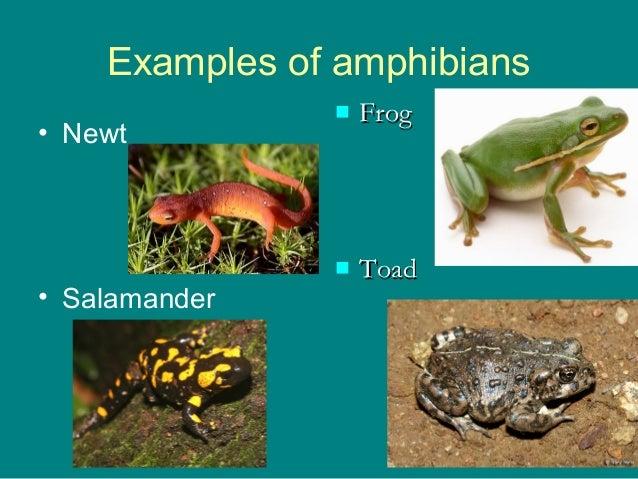 Reptiles, Amphibians a...