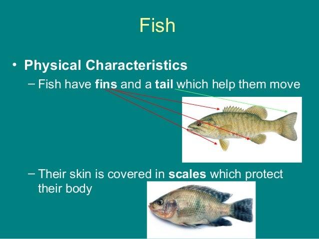 What similar characteristics do birds reptiles for Characteristics of fish