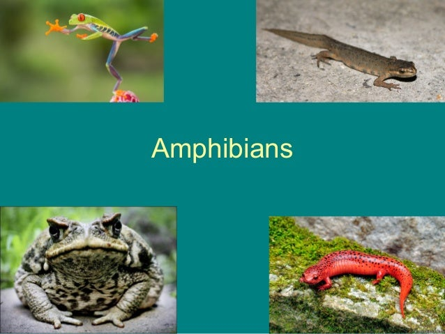 Reptiles, Amphibians and fish ppt 10 Examples Of Reptiles