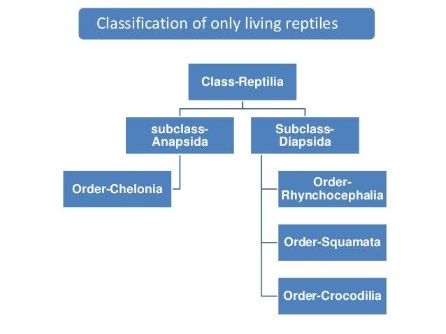 Reptilia classification by deepak rawal