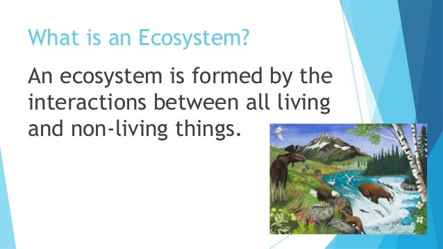 Res types of ecosystems