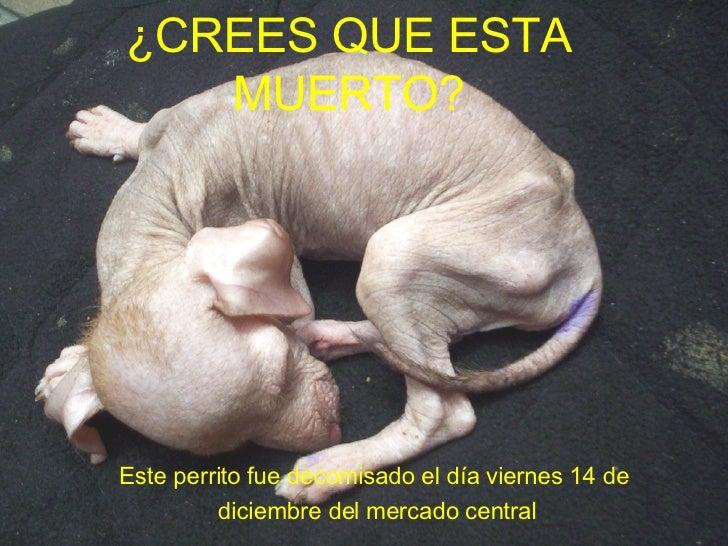 Este perrito fue decomisado el día viernes 14 de  diciembre del mercado central ¿CREES QUE ESTA MUERTO?