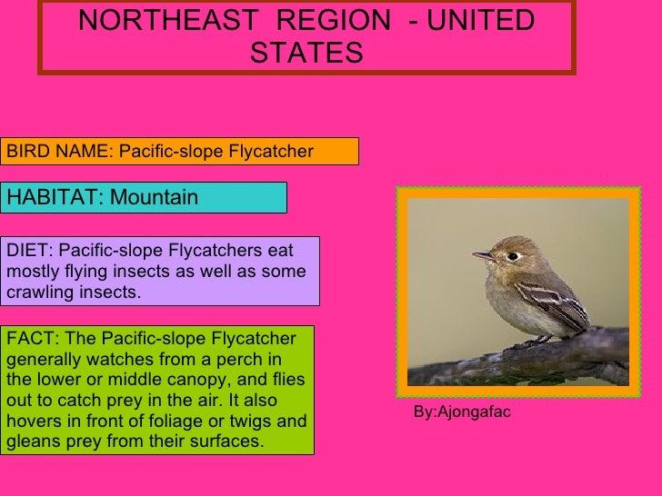 NORTHEAST  REGION  - UNITED STATES BIRD NAME: Pacific-slope Flycatcher  HABITAT: Mountain DIET: Pacific-slope Flycatchers ...