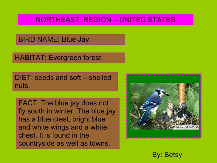 NORTHEAST  REGION  - UNITED STATES BIRD NAME: Blue Jay. HABITAT: Evergreen forest. DIET: seeds and soft – shelled nuts. FA...
