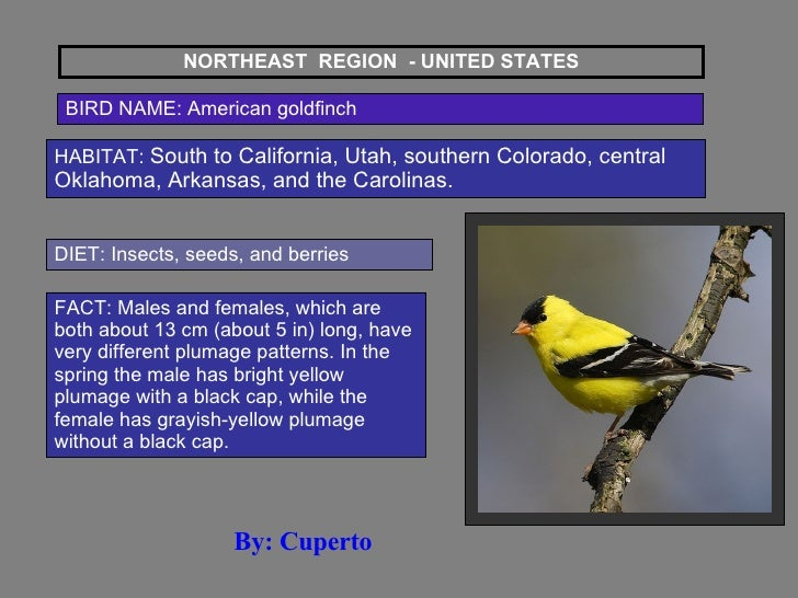 NORTHEAST  REGION  - UNITED STATES BIRD NAME: American goldfinch HABITAT:  South to California, Utah, southern Colorado, c...