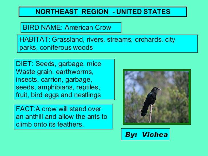 NORTHEAST  REGION  - UNITED STATES BIRD NAME: American Crow HABITAT: Grassland, rivers, streams, orchards, city  parks, co...