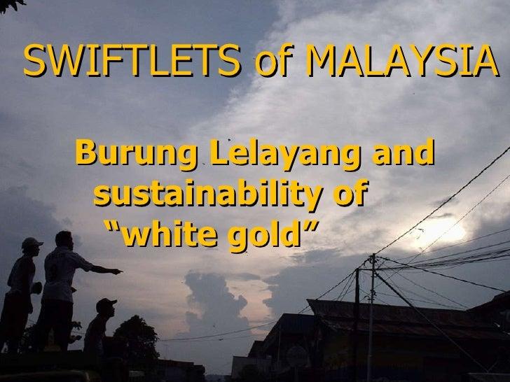 """SWIFTLETS of MALAYSIA <ul><li>Burung Lelayang and sustainability of  </li></ul><ul><li>"""" white gold""""  </li></ul>"""