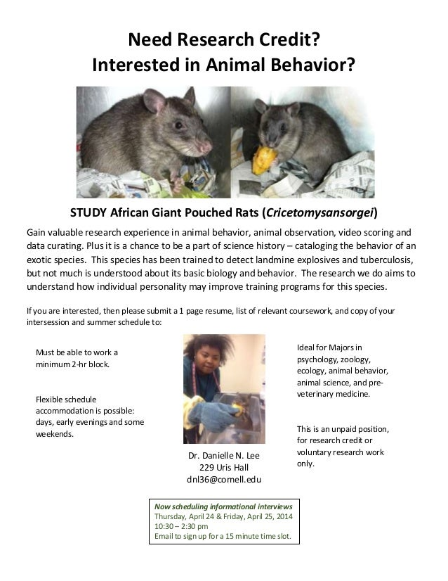 Need Research Credit? Interested in Animal Behavior? STUDY African Giant Pouched Rats (Cricetomysansorgei) Gain valuable r...