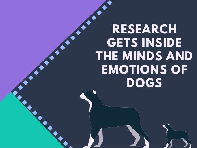 RESEARCH GETS INSIDE THE MINDS AND EMOTIONS OF DOGS