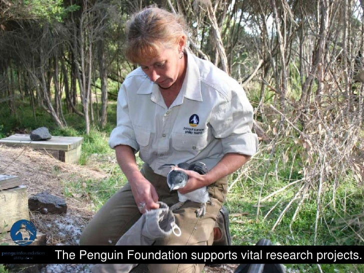 The Penguin Foundation supports vital research projects.