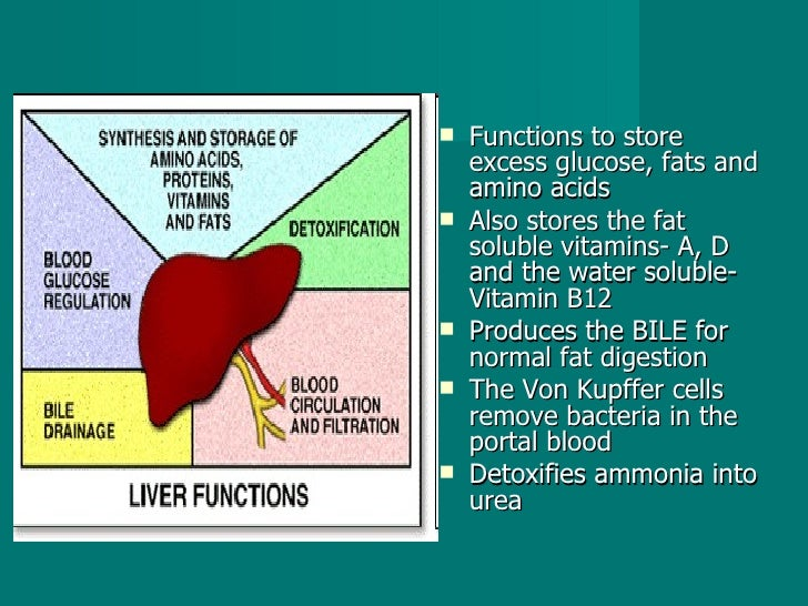<ul><li>Functions to store excess glucose, fats and amino acids  </li></ul><ul><li>Also stores the fat soluble vitamins- A...