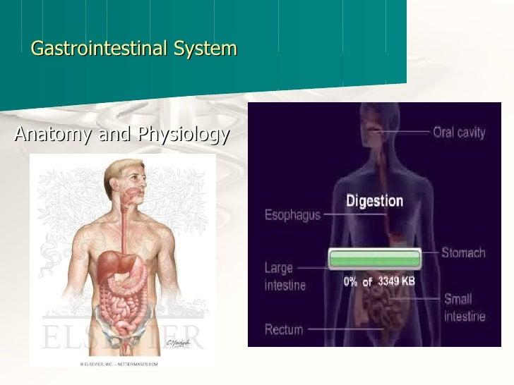 Gastrointestinal System <ul><li>Anatomy and Physiology </li></ul>