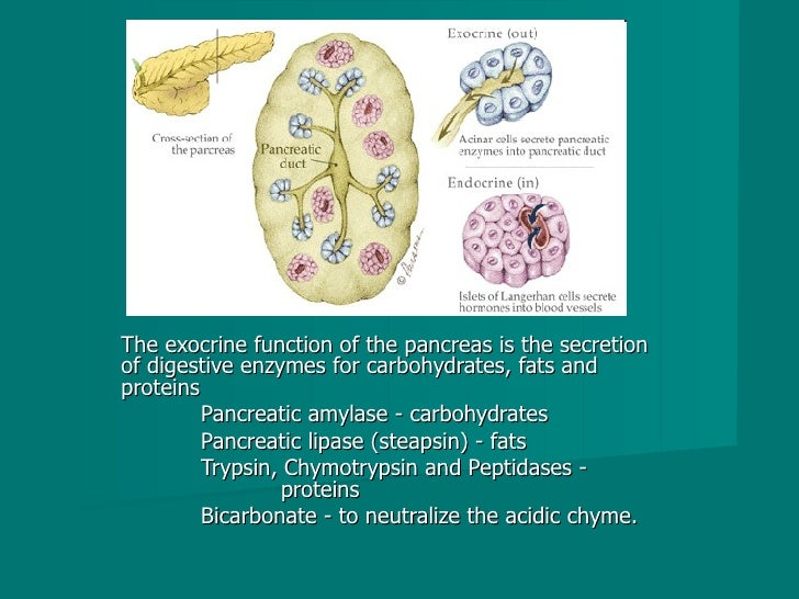 The exocrine function of the pancreas is the secretion of digestive enzymes for carbohydrates, fats and proteins  Pancreat...