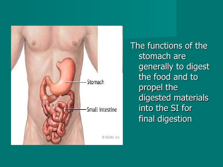 <ul><li>The functions of the stomach are generally to digest the food and to propel the digested materials into the SI for...