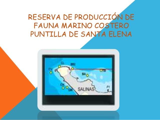 RESERVA DE PRODUCCIÓN DE FAUNA MARINO COSTEROPUNTILLA DE SANTA ELENA