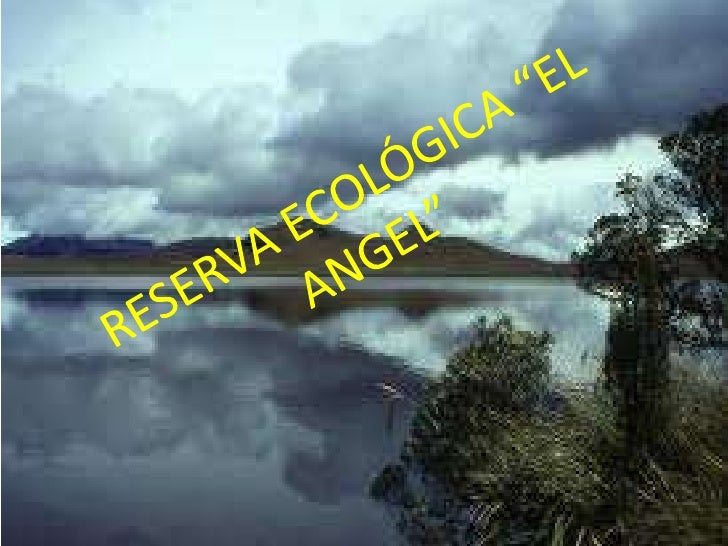 DATOS GENERALES.• Ubicación• La Reserva Ecológica El Ángel pertenece al cantón  Espejo y se ubica a 20 minutos al norte de...