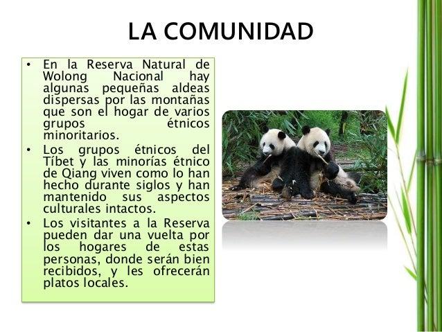 Centro de investigación • En junio de 1980, fue fundado el Centro de investigación y conservación chino para el panda giga...