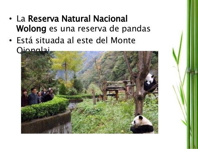 • La Reserva Natural Nacional Wolong es una reserva de pandas • Está situada al este del Monte Qionglai