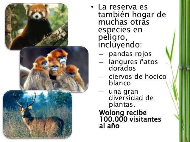 • La reserva es también hogar de muchas otras especies en peligro, incluyendo: – pandas rojos – langures ñatos dorados – c...