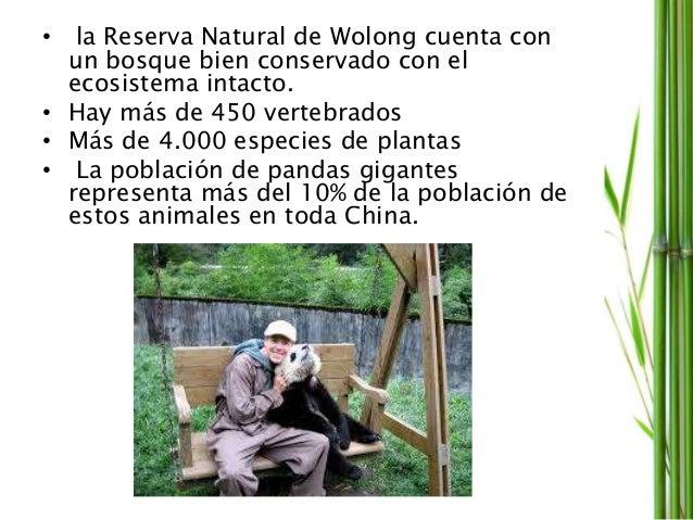 • la Reserva Natural de Wolong cuenta con un bosque bien conservado con el ecosistema intacto. • Hay más de 450 vertebrado...