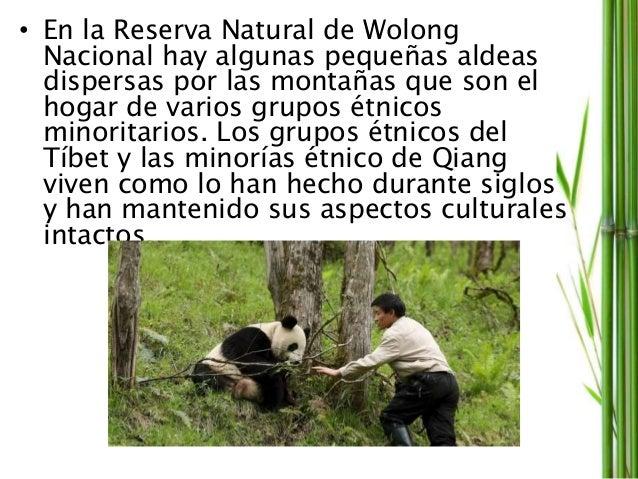 OBJETIVOS • La Reserva Natural de Wolong para centrarse en la construcción de objetivos reserva natural de primera calidad...