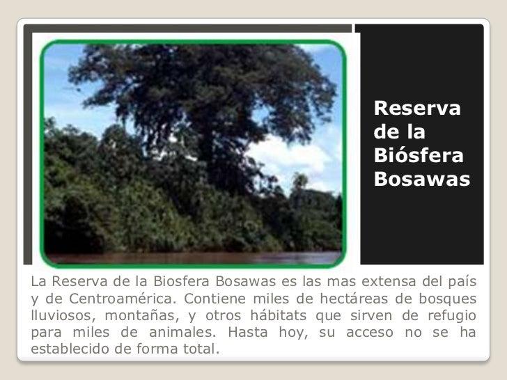 Reserva de la Biósfera Bosawas <br />La Reserva de la Biosfera Bosawas es las mas extensa del país y de Centroamérica. Con...