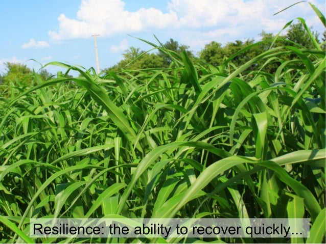 Resilience: the ability to recover quickly...