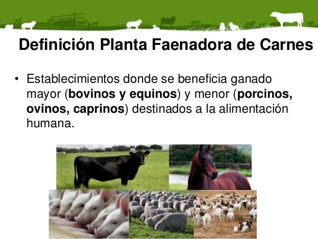 Residuos de plantas faenadoras de animales  Slide 2