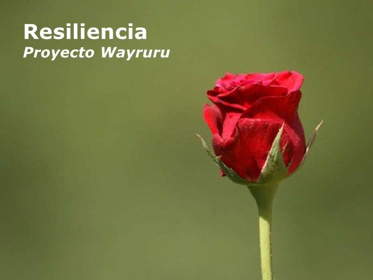 Resiliencia Proyecto Wayruru