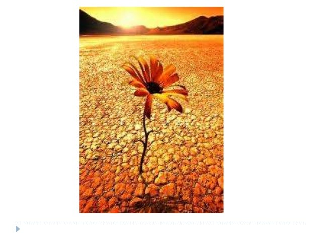  La resiliencia se considera una historia de adaptaciones exitosas en el individuo que se ha visto expuesto a factores de...