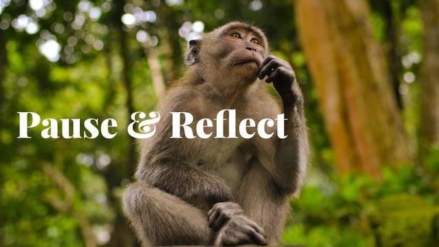 21 Pause & Reflect