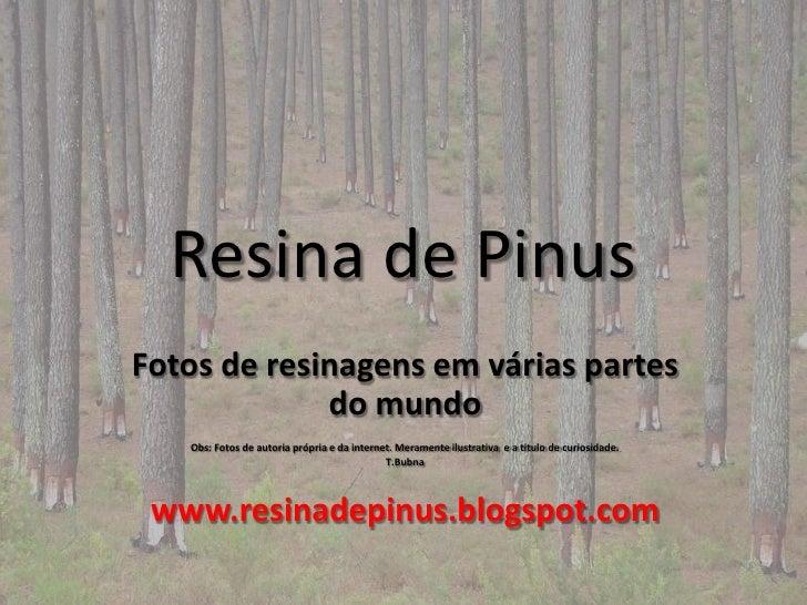 Resina de PinusFotos de resinagens em várias partes             do mundo   Obs: Fotos de autoria própria e da internet. Me...