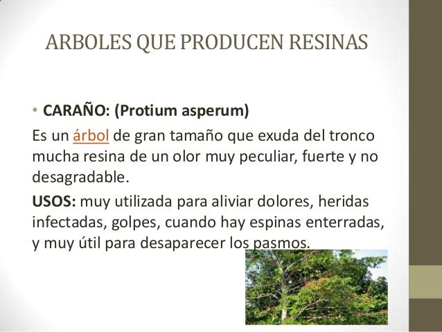 Resinas for Tipos de plantas forestales