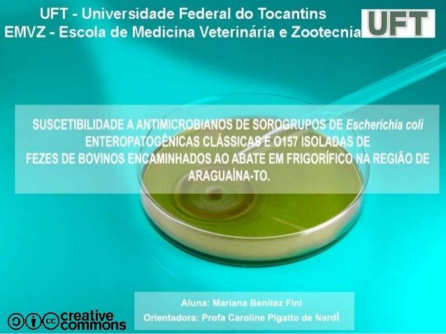 Introdução Escherichia coli • Bacilo Gram-negativo • Família Enterobacteriaceae • Uma das mais antigas bactérias simbionte...
