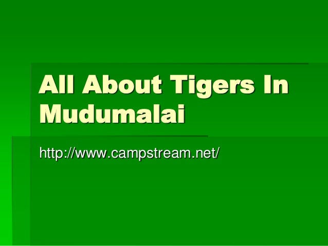 All About Tigers In Mudumalai http://www.campstream.net/