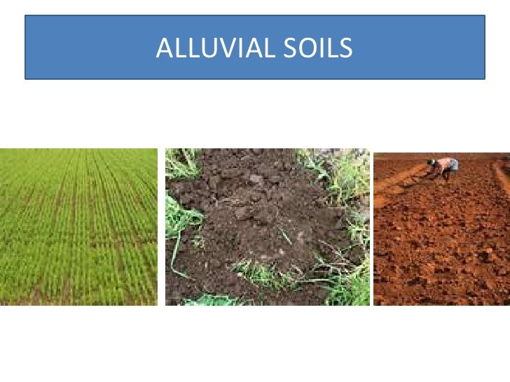 Resources and their development class x geography for Soil of india