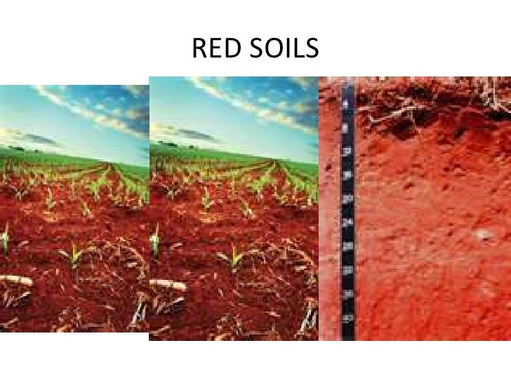 Types of Soils in India