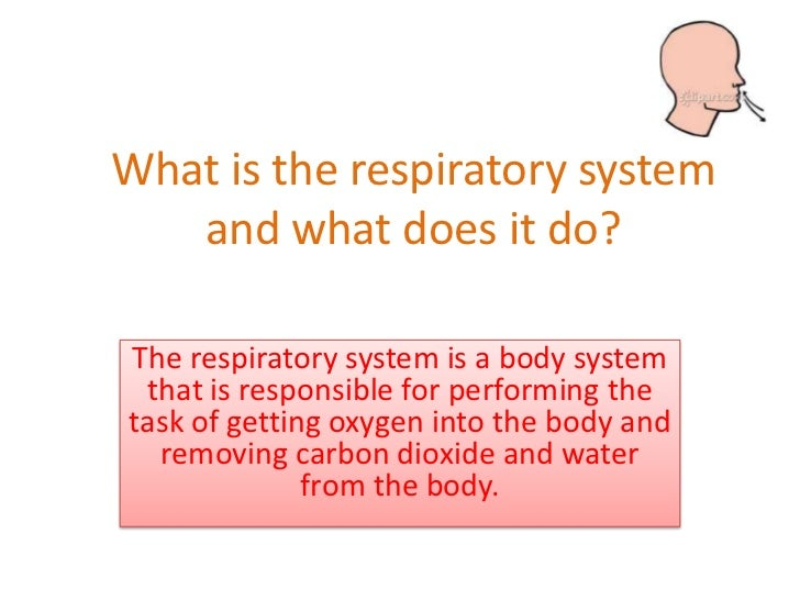 What is the respiratory system   and what does it do?The respiratory system is a body system that is responsible for perfo...