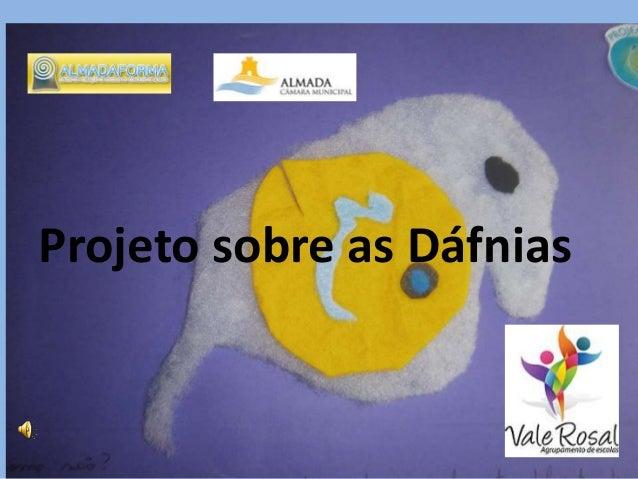 Projeto sobre as Dáfnias