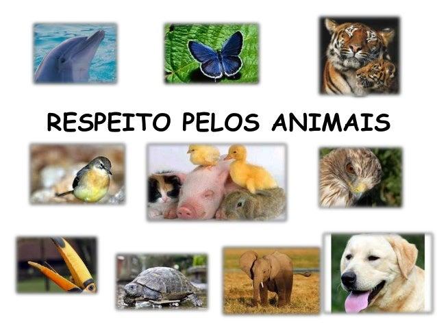 RESPEITO PELOS ANIMAIS