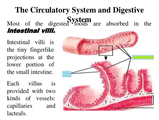 explain how systems interrelate to maintain homeostasis You may save this learning activity to your hard drive  body systems to maintain homeostasis evaluate how the central and peripheral nervous systems interrelate.