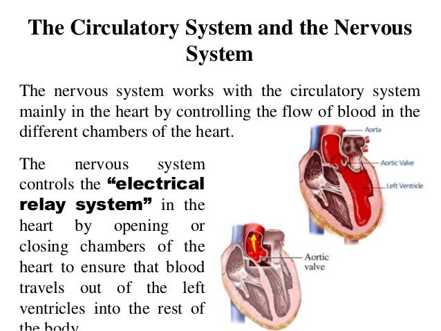 Respiratory system and circulatory system working together with other 84 pneumonia it ccuart Images