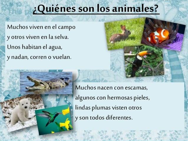 ¿Quiénes son los animales? Muchos viven en elcampo y otros viven en la selva. Unos habitan el agua, y nadan, corren o vuel...