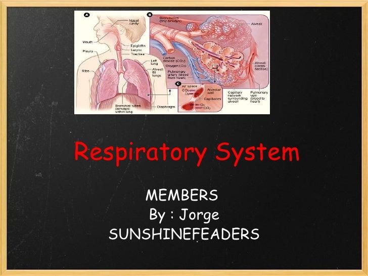 RespiratorySystem MEMBERS By : Jorge SUNSHINEFEADERS